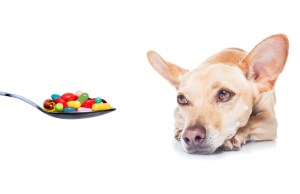 Best Dog Supplements for Dogs and Pets