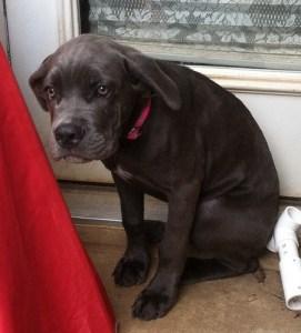California Humane Society Presses For Animal Cruelty Case Against Dog-Sitter