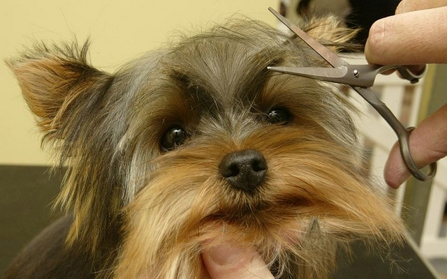 Illinois Dog Grooming Business Eyes the Future