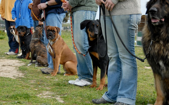 Pennsylvania Dog Training Business Expands and Relocates