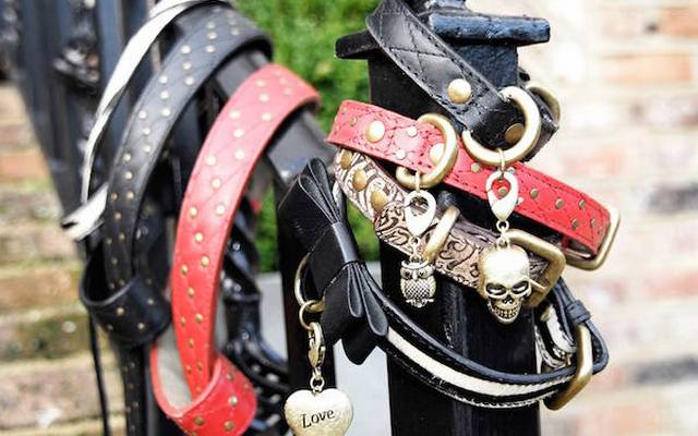 Pet Accessories Startup Looking to Raise $380,000