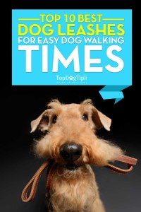 Top 10 - What Is the Best Dog Leash