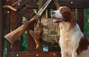 Top Hunting Dog Supplies That'll Make You A Better Hunter