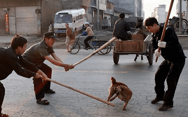 Unusual Dog Ban Launched in China District