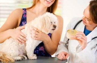 Vet Recommended Dog Food Brands