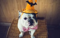 Let's Talk: DIY Dog Halloween Costumes  Top Dog Tips