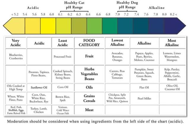 Dog Shampoo - Canine Ph Balance Chart