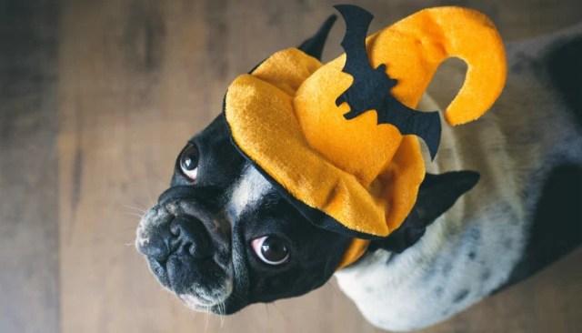 Halloween Hazards for Dogs