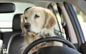 Pooch on Hooch Gets Busted For DUI