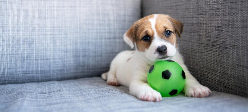 Psychological Tricks That Can Help You Train Your Dog
