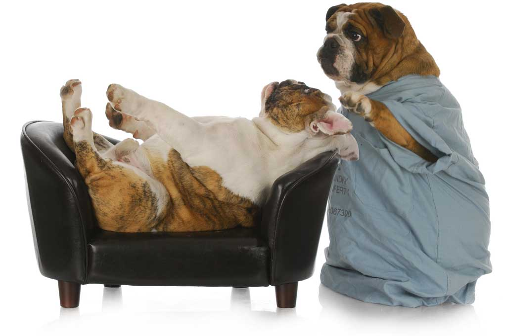 Psychological Tricks in Dog Training