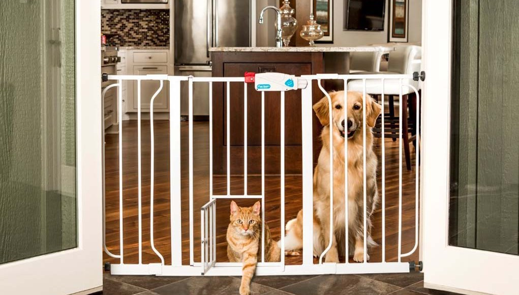 Reasons to Consider Pet Safety Gates for Your Dog