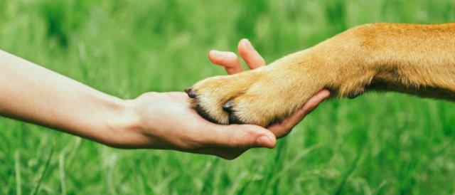 Respect Your Fido - Humane Dog Training Equipment