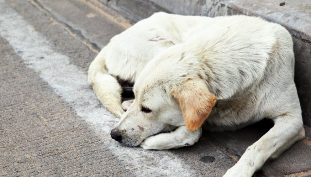 Stray Dogs - Is the UK Still a Nation of Dog Lovers