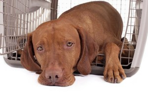 Tips for Picking Out the Right Extra Large Dog Crate