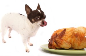 Bringing A Dog to Thanksgiving Dinner