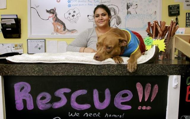 Can This Couple Revolution Dog Rescue Organizations