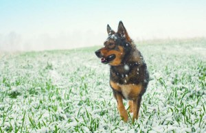 Cold Weather Preparation for Dogs