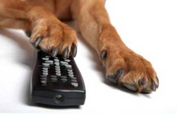 Dog Lovers Are Going to Start Watching A Lot More Television