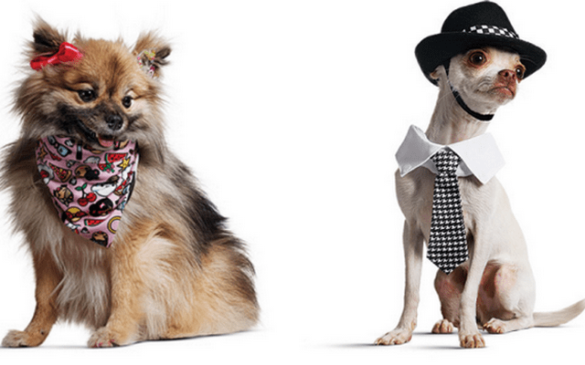 Interested in Dressing Your Dog Like a  Harajuku Lover