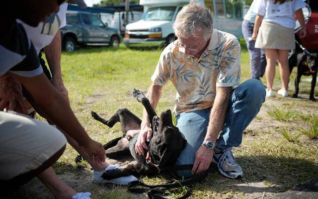 Is This Florida Dog Law Unconstitutional