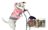 Pets on a Budget: What's the Best Place to Buy Cheap Dog ...