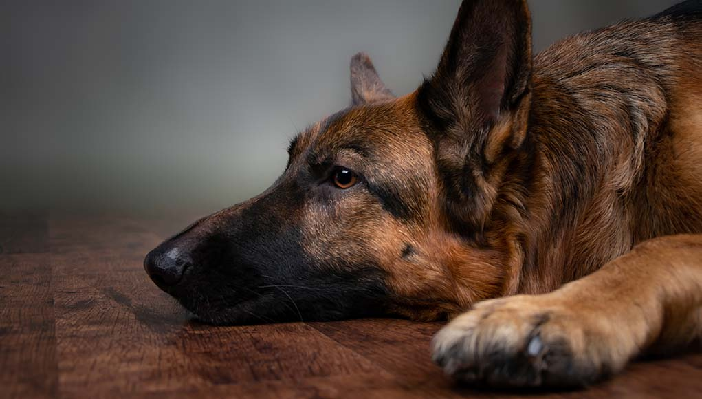 The Best Dog Illness Symptom Checker Online