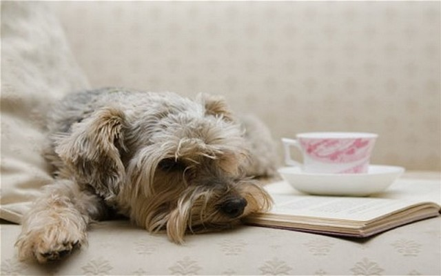 Want to Do Tea Time With Your Pup