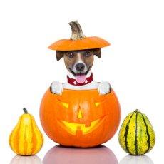 dog thanksgiving decoration safety