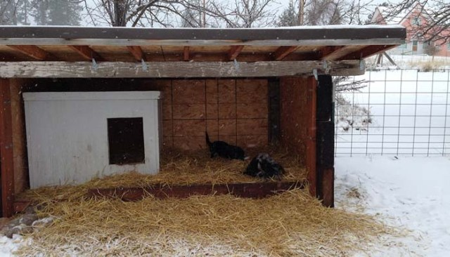 Example of diy cold weather dog house in action
