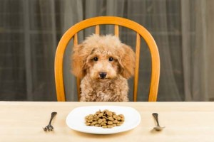 feed your dog before travel