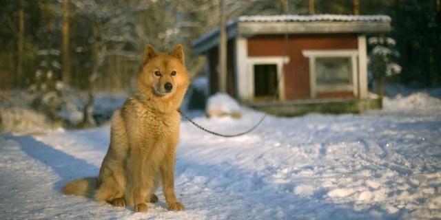 winter dog next to dog house guarding
