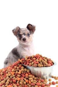 Best Dog Food Deals This Christmas