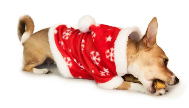 Best Dog Treats as Christmas Gifts