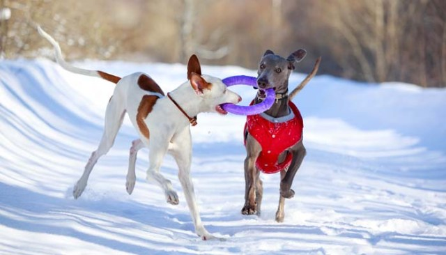 Best Interactive Toys for Dogs for Christmas