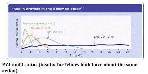 Canine Diabetes Insulin Chart