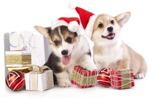 Cheap Dog Supplies - Best Christmas Discounts for Dogs
