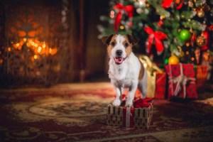 Dog Christmas Presents