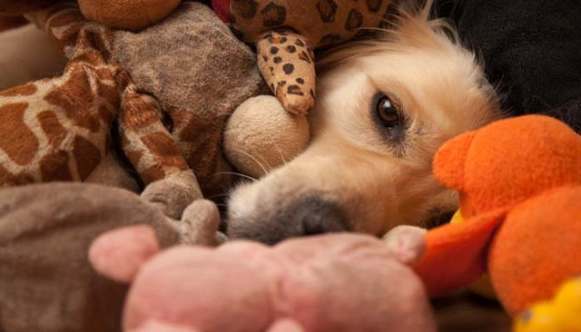Dog toys to keep your dog from running away