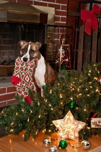 Dogs and Christmas tree dangers