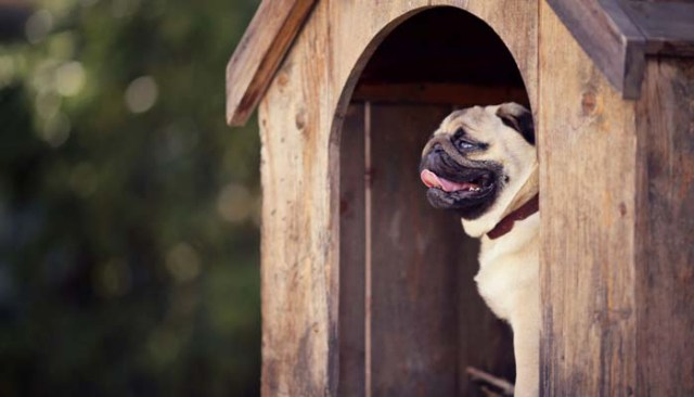 How to Build a DIY Dog House for Dogs
