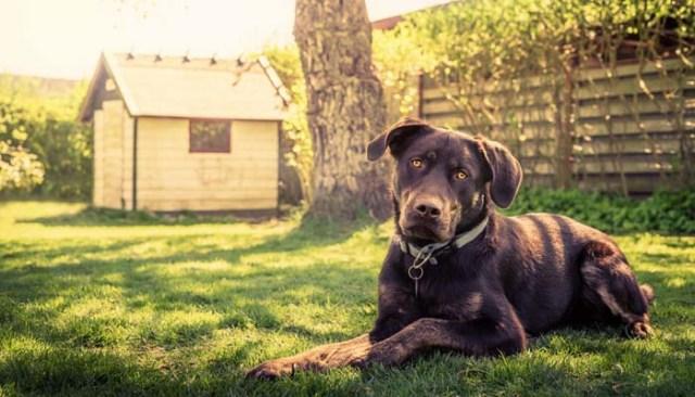 How to Build a DIY Dog House