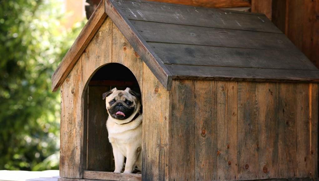 How to Build a Dog House - 5 DIY Experts' Advice