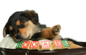 How to Choose a Name for Your Puppy