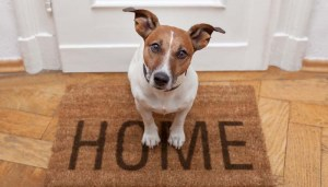 Safe and secure home for dogs