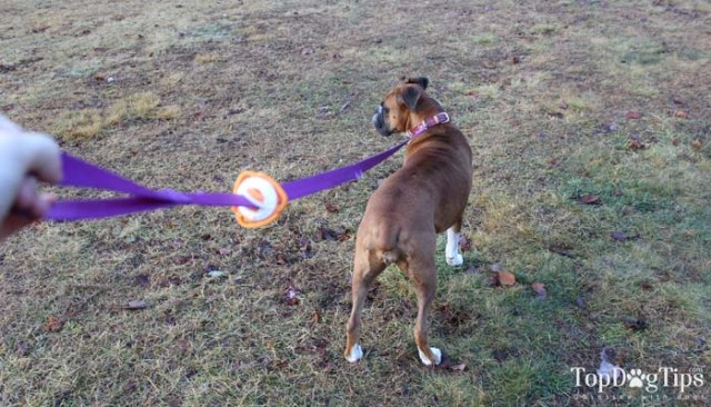 Giveaway - The Fifth Paw Dog Leash Attachment