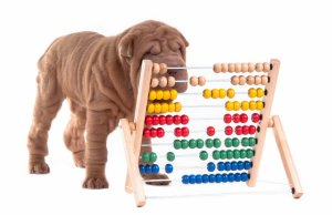 The Importance of Cognitively Challenging Your Dog