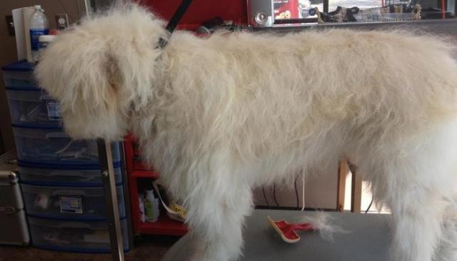 What's It Like to Be a Professional Dog Groomer