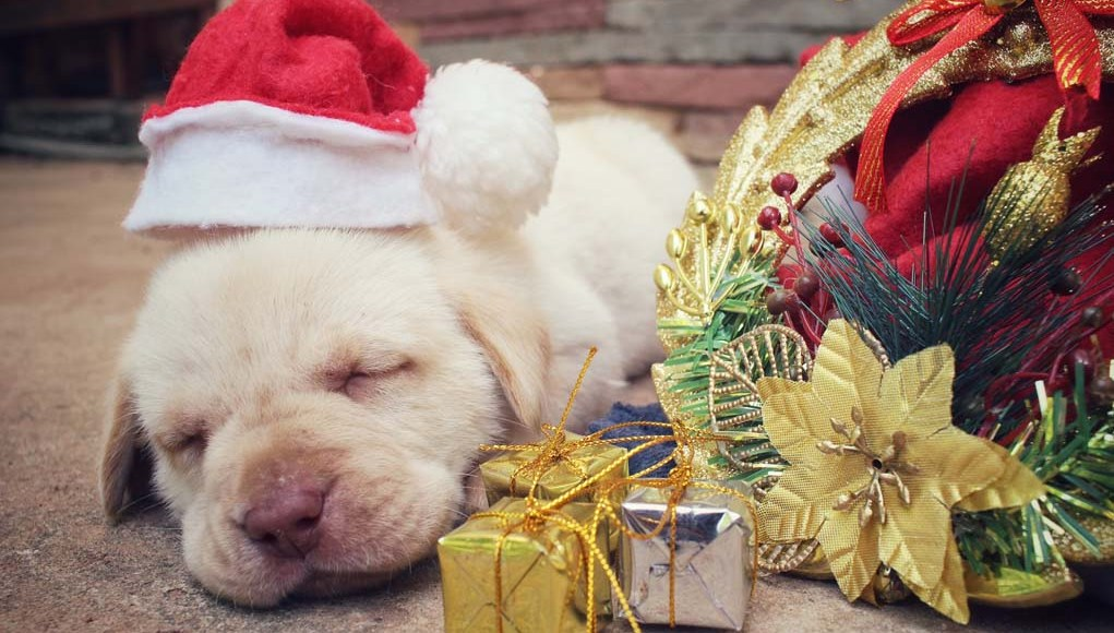 Tips to Ensure Your Dog is Safe During the Holidays