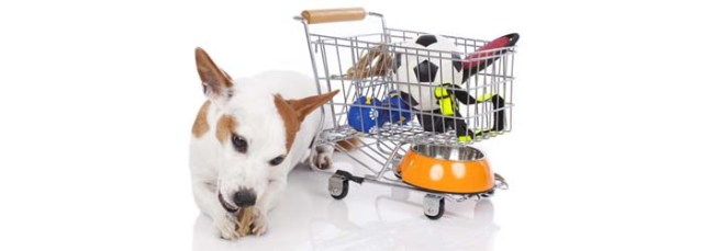 Amazon Best Deals on Dog Supplies